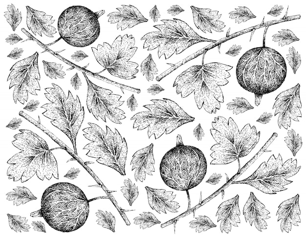 Hand drawn wallpaper of gooseberries on white background
