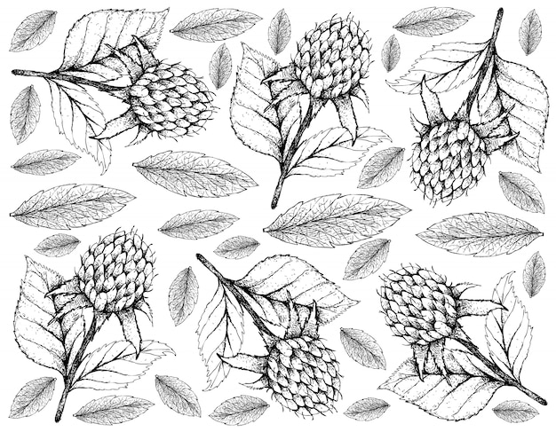 Hand drawn wallpaper of korean black raspberries