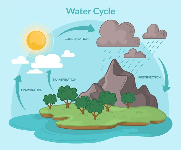 Hand drawn water cycle