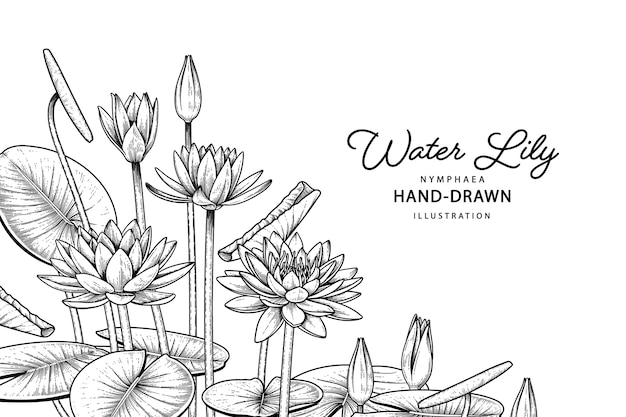 Hand drawn water lily flower black line art isolated on white backgrounds.