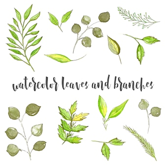 Hand drawn watercolor botanical elements, green, leaves and branches