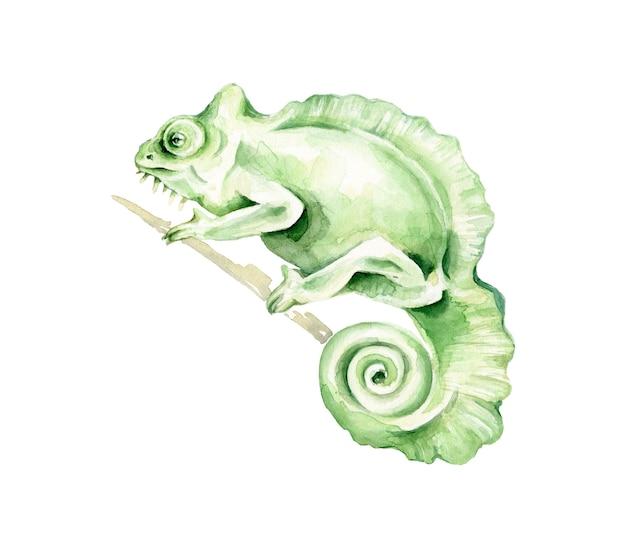 手描きの水彩カメレオン。エキゾチックな動物。