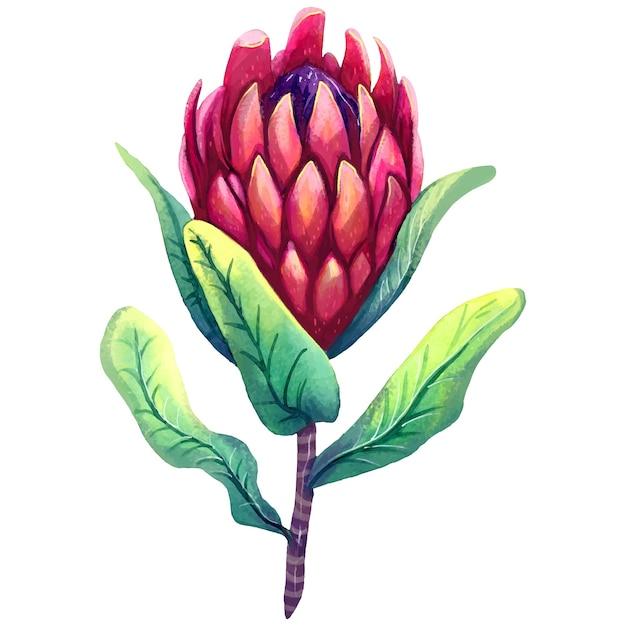 Protea 꽃의 손으로 그린 수채화 그림