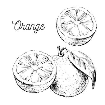 Ручной обращается акварель на белом фоне. иллюстрация фруктового апельсина