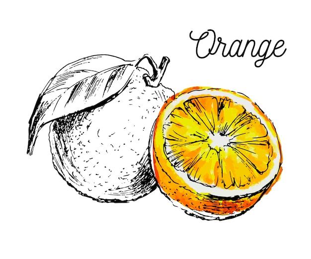 Hand drawn watercolor painting  of orange fruit