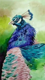 Hand drawn watercolor peacock in the zoo sketch