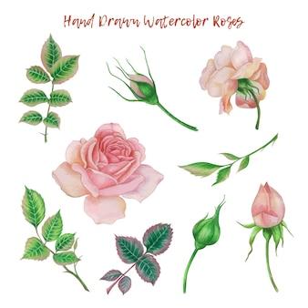 손으로 그린 수채화 장미 꽃 요소 집합