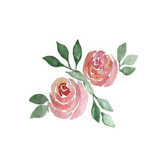 Hand drawn watercolor rose flower. isolated on white vector illustration.
