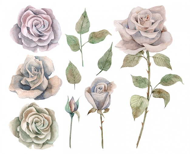 Hand drawn watercolor set of vintage roses and leaves