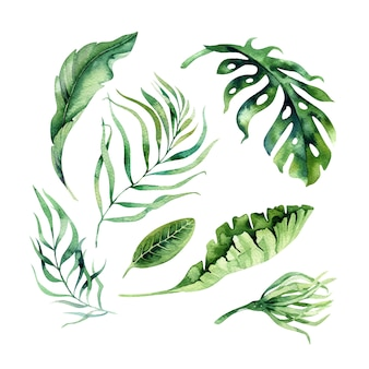 手描き水彩の熱帯の花と葉。エキゾチックなヤシの葉、ジャングルの木、ブラジルの熱帯植物要素と花。