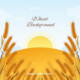 Hand drawn wheat background