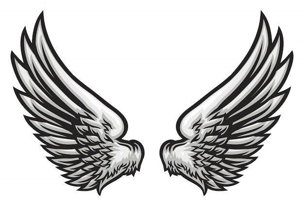 Hand drawn wing illustration