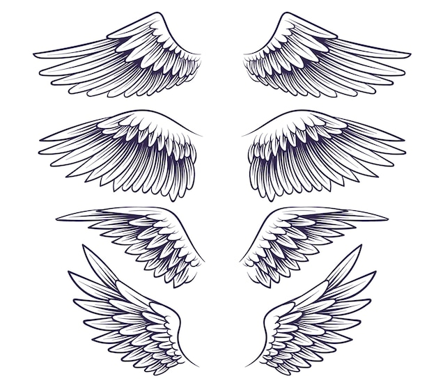 Hand drawn wing. sketch angel wings with feathers, elements for logo