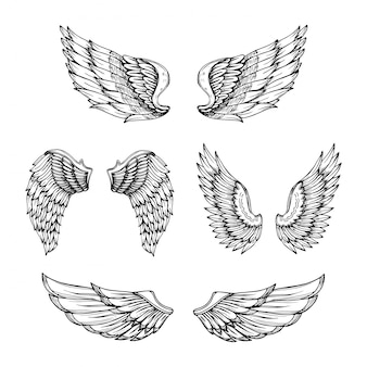 Hand drawn wing. sketch angel wings with feathers.