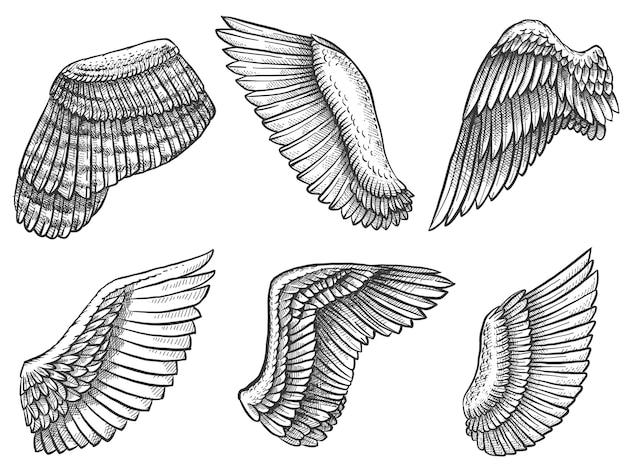 Рука нарисованные крылья. эскиз птицы или крыла ангела с перьями, выгравированы различные геральдические символы для татуировки или набора старинных векторных эмблем. элементы крыла в разном положении и форме