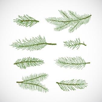 手描きの冬の常緑のトウヒまたは松の木の枝は、カラフルなモミの小枝のスケッチコレクションを設定します