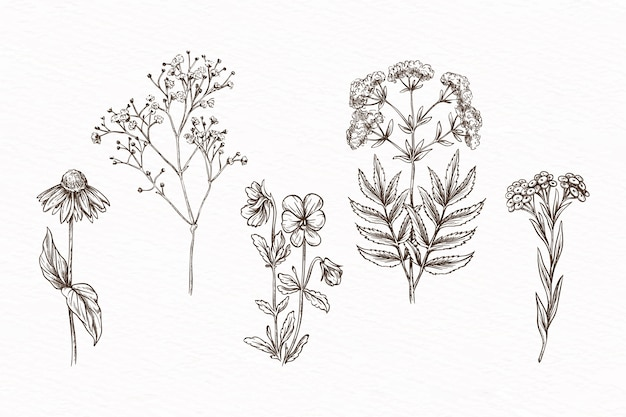 Hand-drawn with herbs & wild flowers
