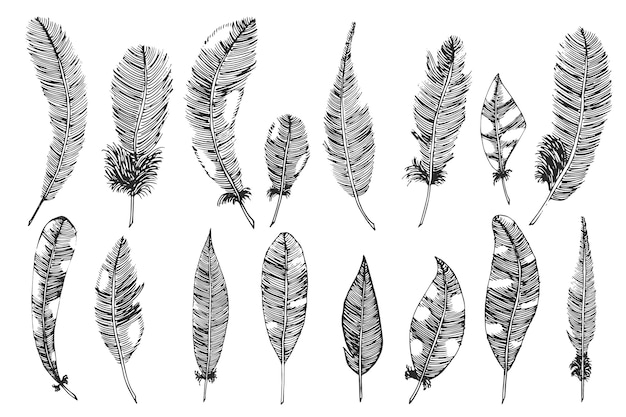 Hand drawn with ink feathers. vector illustration, sketch.