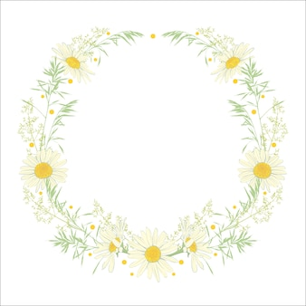 Hand drawn wreath with camomile and herbs.
