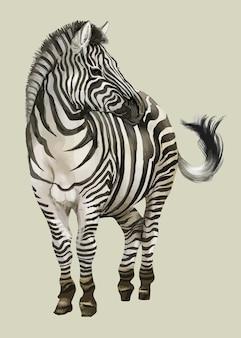 Рисованная зебра