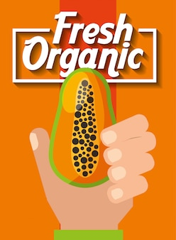 Hand holding fresh organic fruit papaya