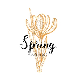Hand made lettering - spring is coming soon. vintage hand drawn crocus. sketch. spring flowers.