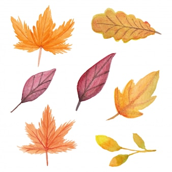 Hand painted autumn leaf in watercolor illustration set