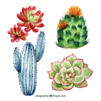Hand painted cactus background