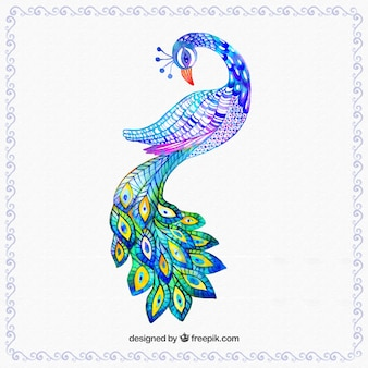 Hand painted colorful peacok