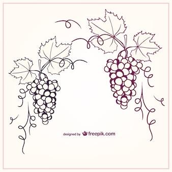 Виноград векторные иллюстрации