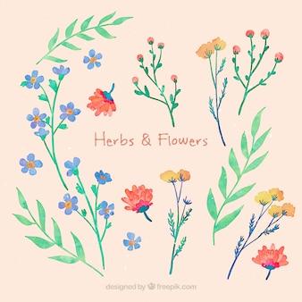 손으로 그린 허브와 꽃