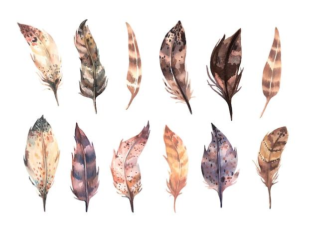 水彩の茶色の羽のコレクションで手描き