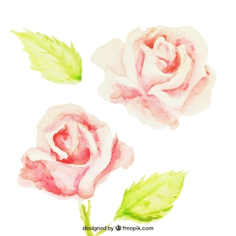 Hand painted roses Free Vector