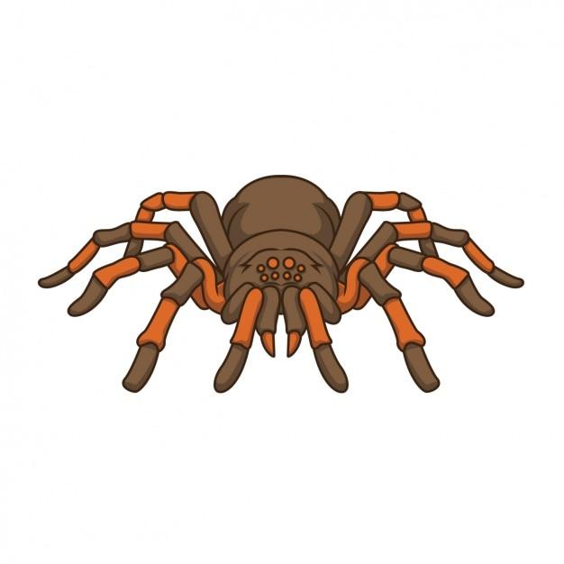 spider vectors photos and psd files free download rh freepik com spider vectorpark spyder victor ii