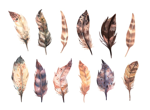 Hand painted in watercolor brown feathers collection
