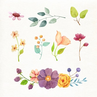 Hand painted watercolor flower collection