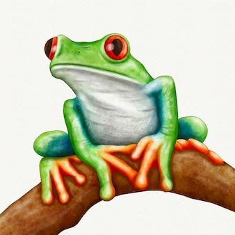 手描きの水彩カエルのイラスト