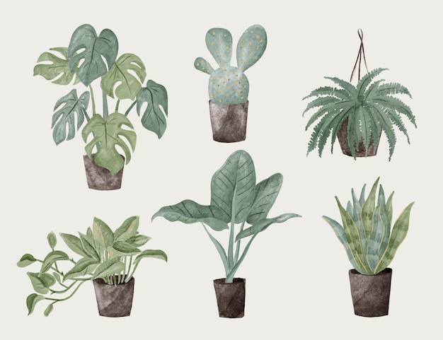 손으로 그린 수채화 관엽 식물 컬렉션