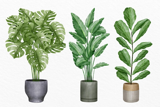 Hand painted watercolor houseplant collection