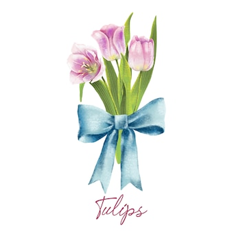 Hand painted watercolor illustration of pink tulips with bow