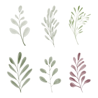 Hand painted watercolor leaf foliage element collection