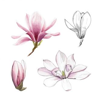 손으로 그린 수채화 목련. 봄에 성장하는 목련 꽃의 집합입니다.