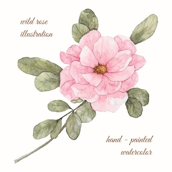 Hand painted watercolor wild rose illustration
