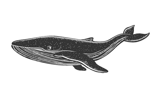 손으로 그린 고래. 고래와 향유 고래.