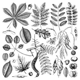 Нарисованная рукой коллекция осенних листьев в черном элегантные и модные ботанические элементы. ручной обращается осенние листья, ягоды, зарисовки семян. идеально подходит для приглашения, открыток, флаеров, этикеток, упаковки.