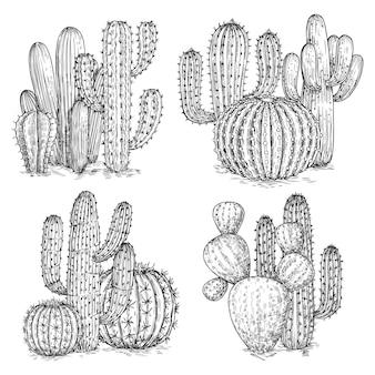 手スケッチサボテンのイラスト。白い背景の上の砂漠の花の組成