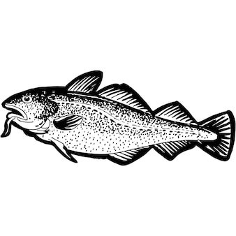 手スケッチタラ魚ベクトル