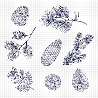 Hand sketched fir tree branches and cones vector illustration