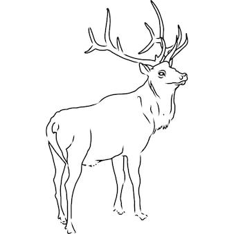 Hand sketched, hand drawn elk vector
