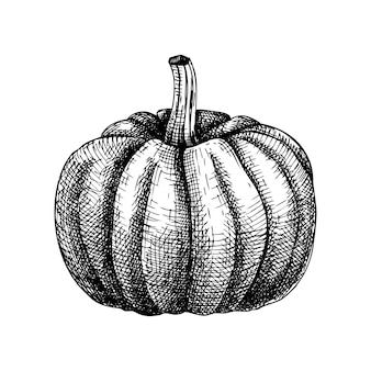 Рука сделала набросок тыквы иллюстрации. рисунок тыквенного ореха. элемент дня благодарения. эскиз фестиваля урожая осени. осенний план питания. тыква хэллоуина.